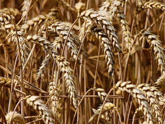 Prueba de la actividad comercial para participar en determinados contingentes de cereales